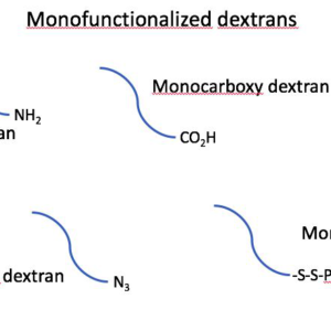 Monofunctionalized Dextrans