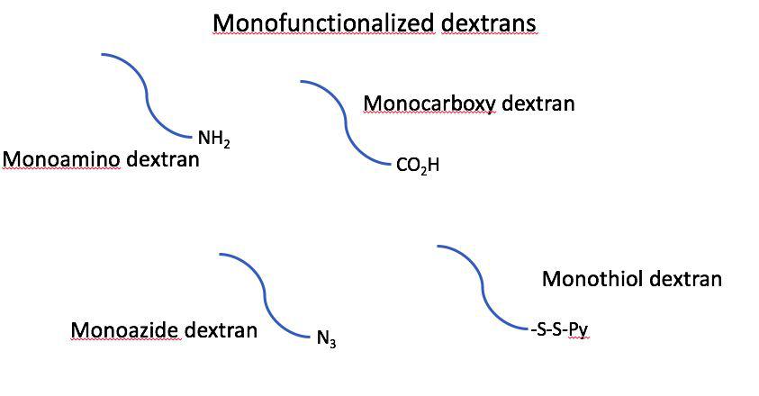 Monofunctionalized Dextrans