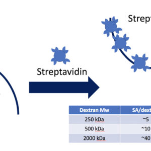 Streptavidin Dextran